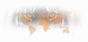 international_web