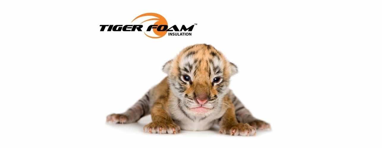 tigerpup